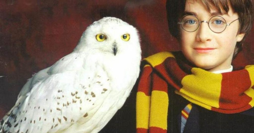 Harry Potter Hedwige