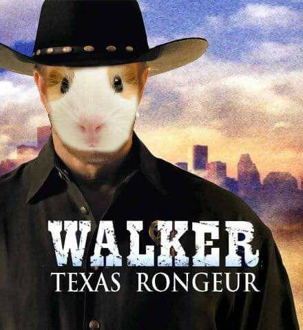walker texas rongeur meme