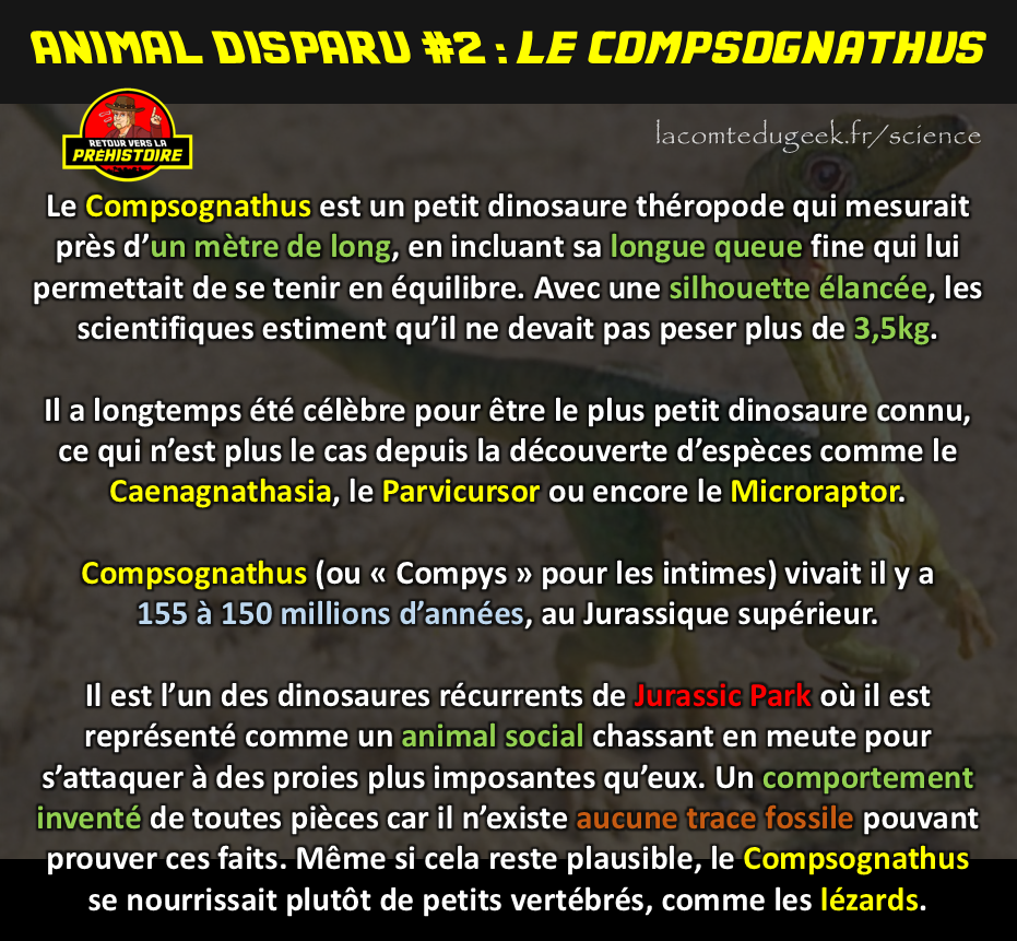 Animal disparu le compsognathus dinosaure
