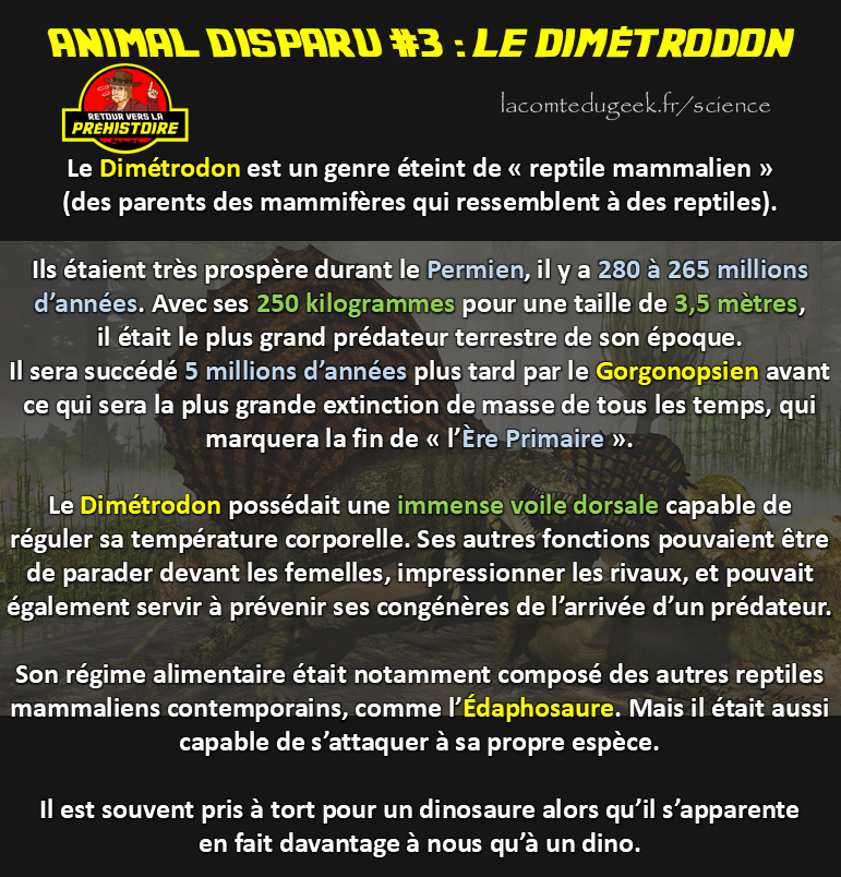 Le Dimétrodon animal disparu fiche documentaire reptile mammalien