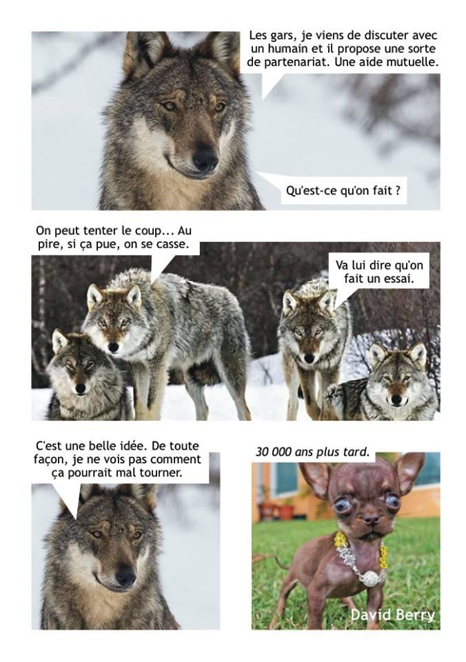 meme evolution loup chien